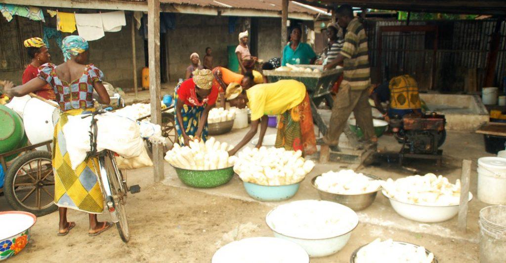 AfDB & Brazil Teach African Youth Cassava Processing | Umaizi
